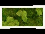 Mosschilderij 100x50cm