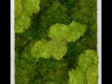 Mosschilderij 60x100cm