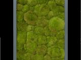 Mosschilderij 40x80cm
