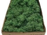 MosBiz Rendiermos Grass green