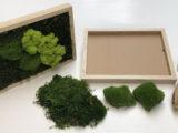 Mos-Doe-Het-Zelfpakket Naturel/Bruin