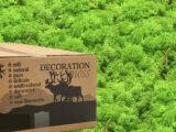 003 MosBiz Rendiermos Grass green light 3 kilo decoraties, schilderijen en mos wanden