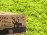 MosBiz Rendiermos Spring green 3 kilo decoraties, schilderijen en mos wanden
