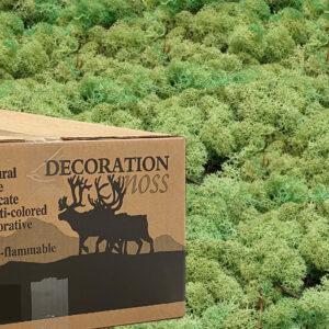 Mint Groen mos rendiermos 3 kilo voor grote wanden