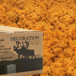 Oranje mos rendiermos 3 kilo voor grote wanden