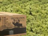 MosBiz Rendiermos oud groen 3 kilo decoraties, schilderijen en mos wanden