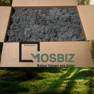 Antraziet mos rendiermos 2 laag 2,6 kilo voor grote wanden