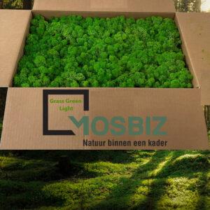 Grass Green Light mos rendiermos 2 laag 2,6 kilo voor grote wanden