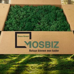 Grass Green mos rendiermos 2 laag 2,6 kilo voor grote wanden