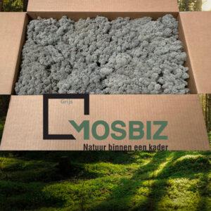 Grijs mos rendiermos 2 laag 2,6 kilo voor grote wanden