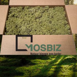 Kiwi mos rendiermos 2 laag 2,6 kilo voor grote wanden