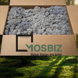 Lavendel mos rendiermos 2 laag 2,6 kilo voor grote wanden