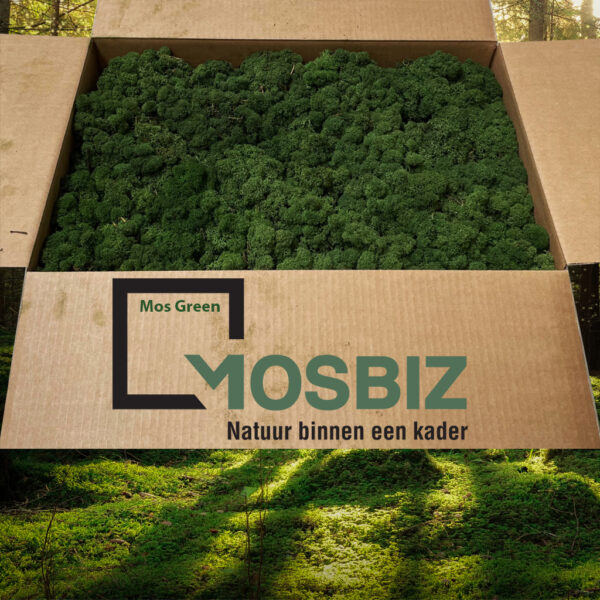 Mos Green mos rendiermos 2 laag 2,6 kilo voor grote wanden