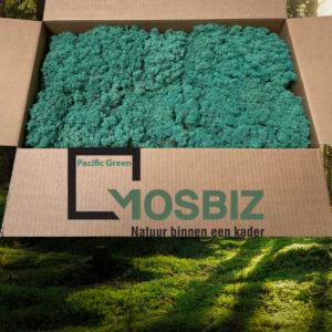 Pacific Green mos rendiermos 2 laag 2,6 kilo voor grote wanden