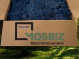 MosBiz Rendiermos 2-Laags | Royal Blue | 2,6 kilo | Ideaal voor grote wanden!