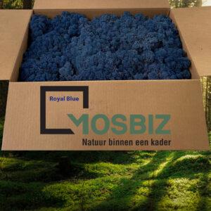 Royal Blue mos rendiermos 2 laag 2,6 kilo voor grote wanden