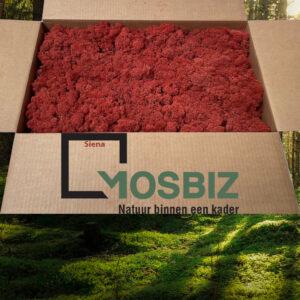 Siena mos rendiermos 2 laag 2,6 kilo voor grote wanden