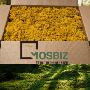 Yellow mos rendiermos 2 laag 2,6 kilo voor grote wanden