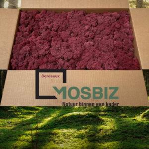 Bordeaux mos rendiermos 2 laag 2,6 kilo voor grote wanden