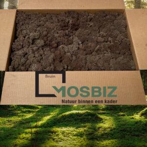 Bruin mos rendiermos 2 laag 2,6 kilo voor grote wanden