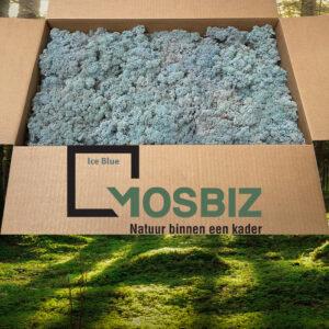 Ice Blue mos rendiermos 2 laag 2,6 kilo voor grote wanden