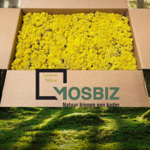 Lemon Yellow mos rendiermos 2 laag 2,6 kilo voor grote wanden