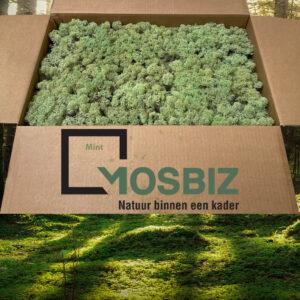 Mint mos rendiermos 2 laag 2,6 kilo voor grote wanden