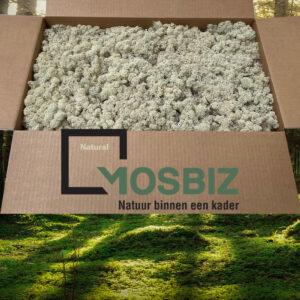 Natural mos rendiermos 2 laag 2,6 kilo voor grote wanden