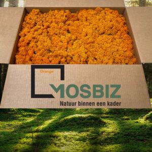 Oranje mos rendiermos 2 laag 2,6 kilo voor grote wanden