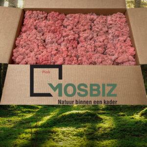 Pink mos rendiermos 2 laag 2,6 kilo voor grote wanden
