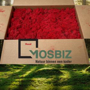 Rood mos rendiermos 2 laag 2,6 kilo voor grote wanden