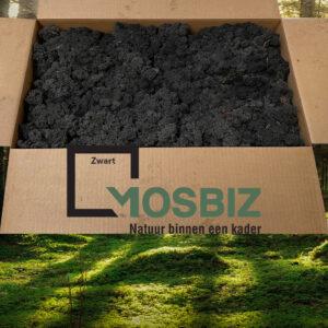 Zwart mos rendiermos 2 laag 2,6 kilo voor grote wanden